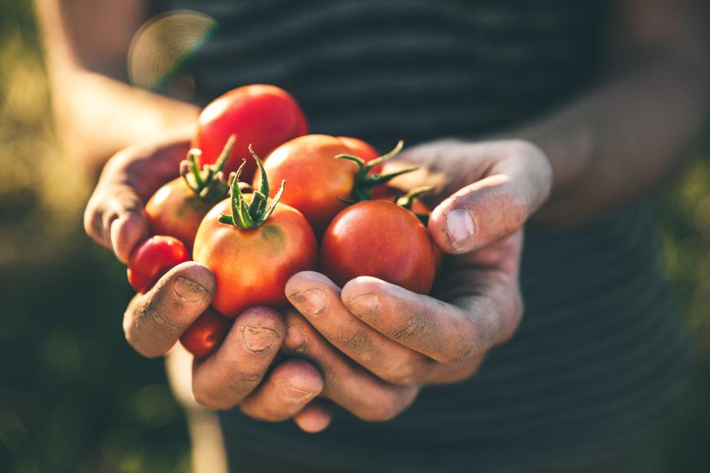 農業で活用されるAIの画像